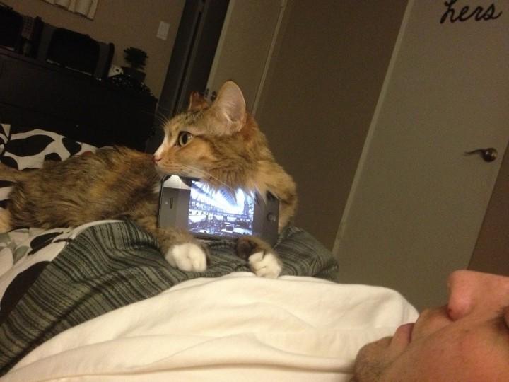 cat_helper (9)
