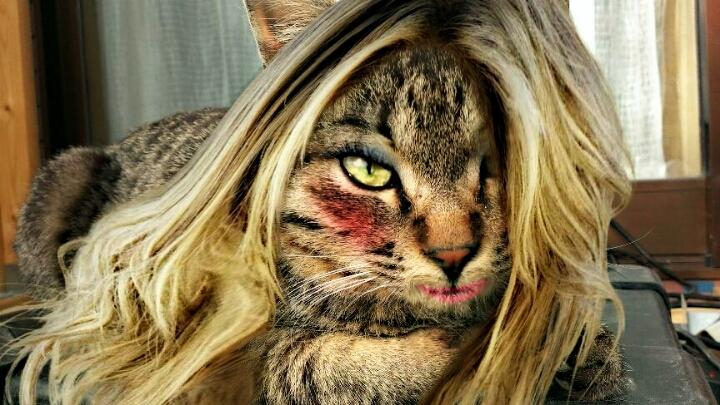 cat_makeup (11)