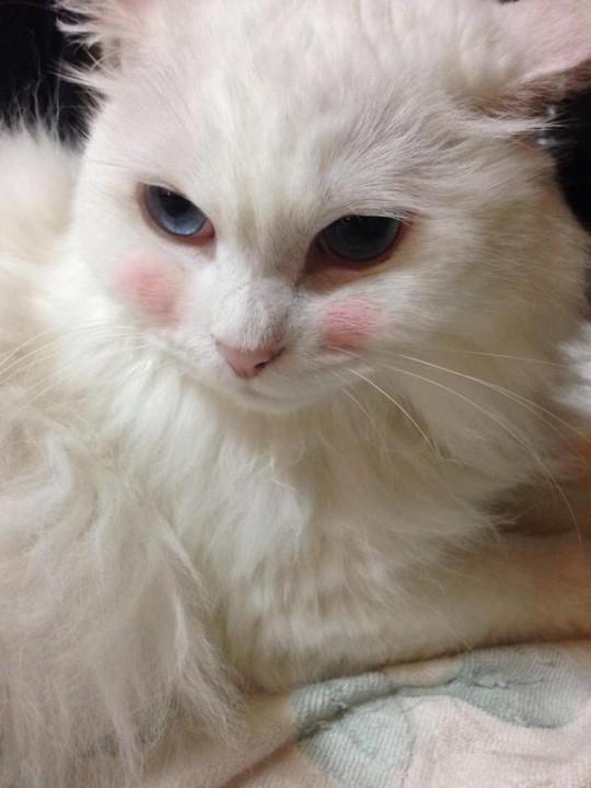 cat_makeup (3)