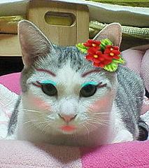 cat_makeup (6)