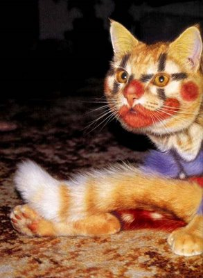 cat_makeup (8)