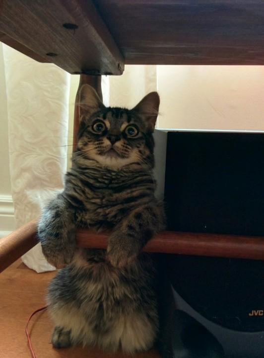 cat_picture (3)