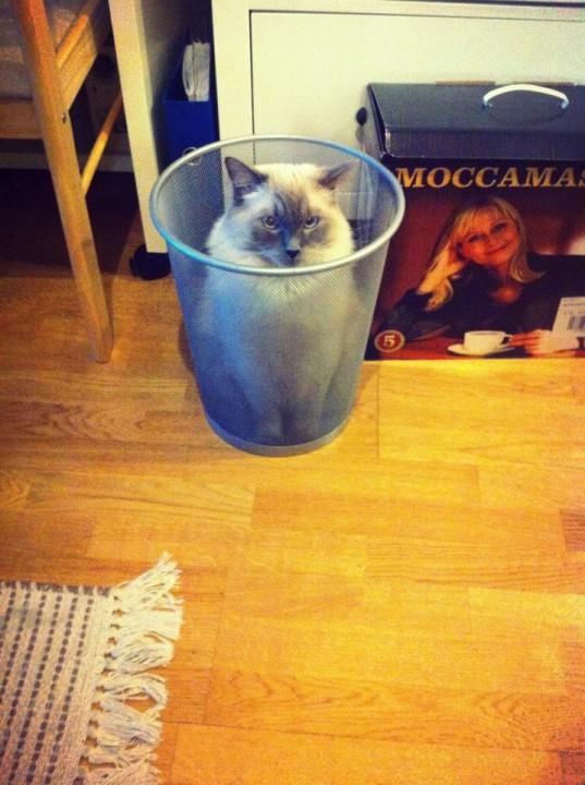 cat_picture (4)