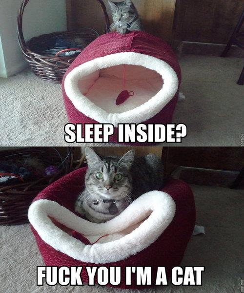 cat_rule (12)