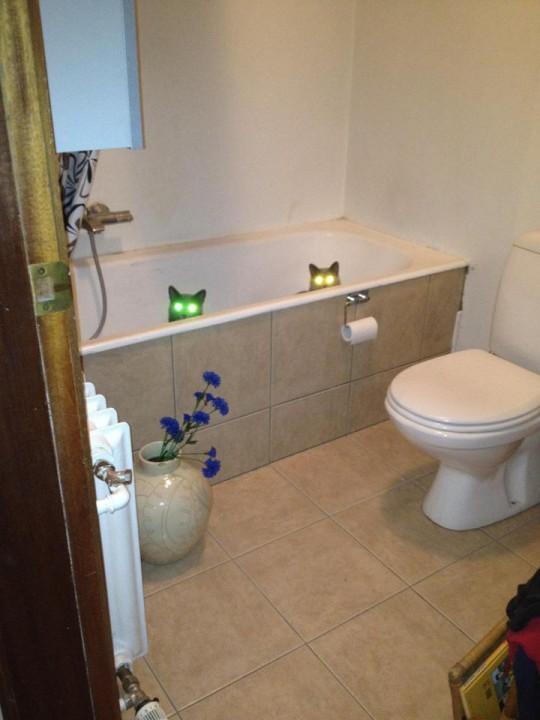 cat_rule (14)