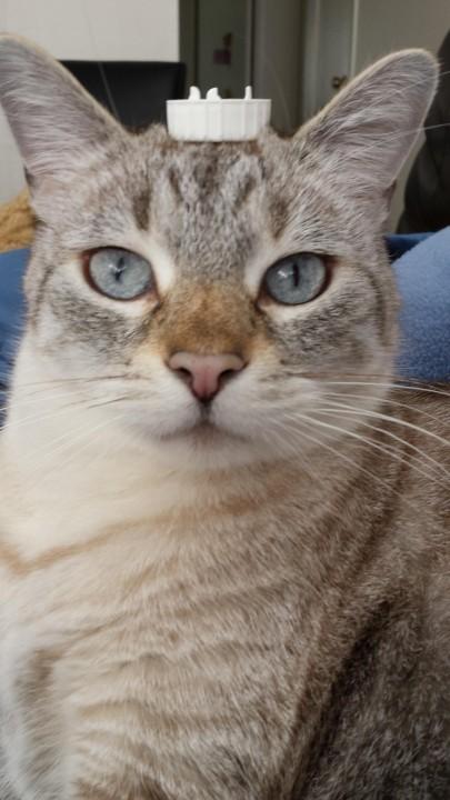 cat_rule (5)