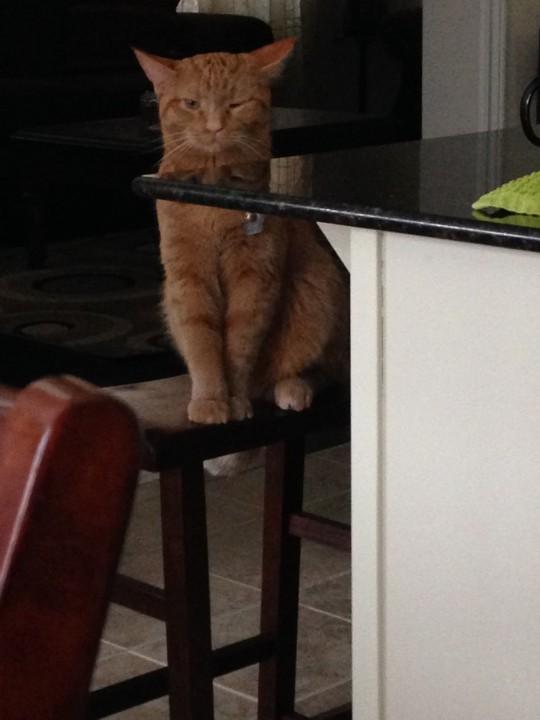 curazy_cat (11)