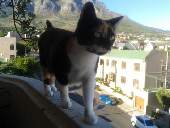 curazy_cat (2)