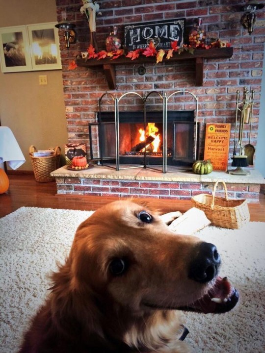 dog_happy_netgeek (1)