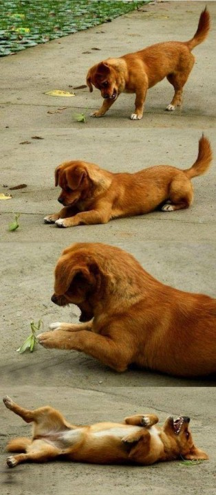 dog_happy_netgeek (14)