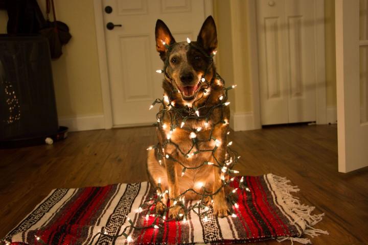 dog_happy_netgeek (9)
