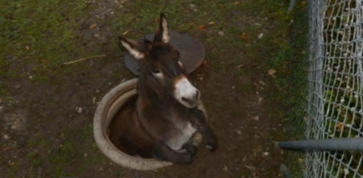 donkey_hole1