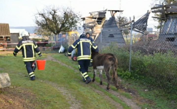 donkey_hole4