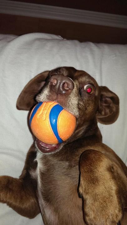 funnydog (14)