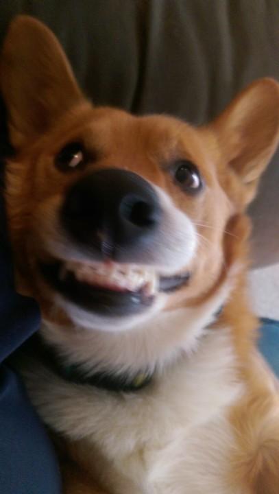 funnydog (17)