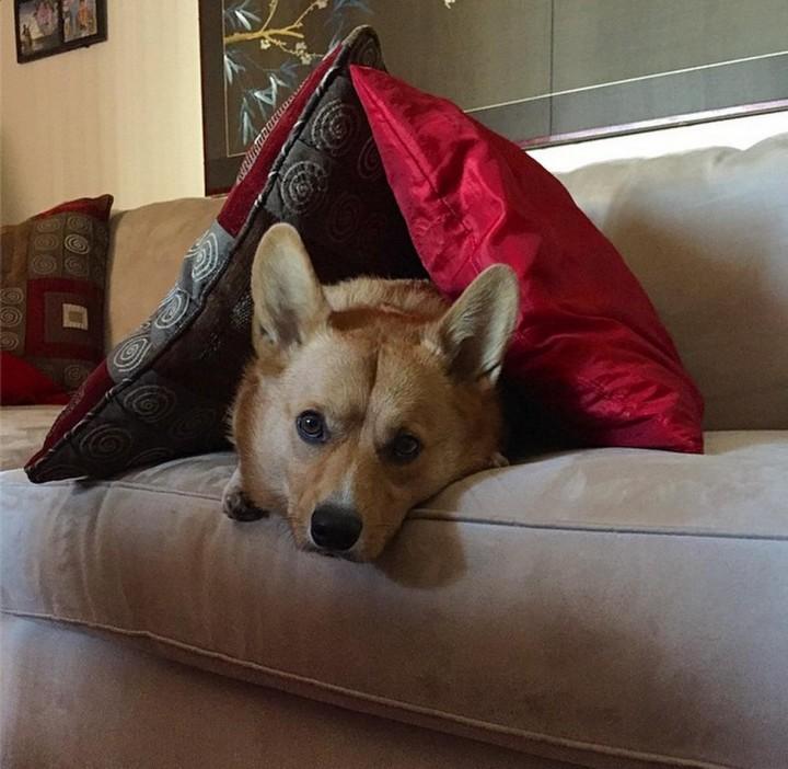 funnydog (3)