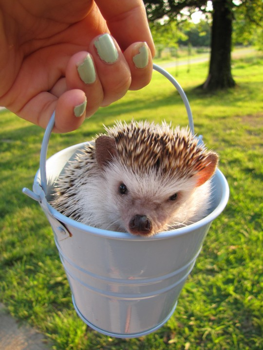 hedgehog _heartwarming (10)