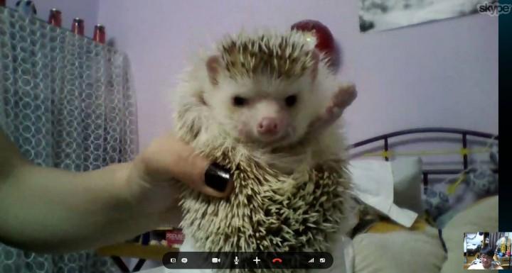 hedgehog _heartwarming (13)