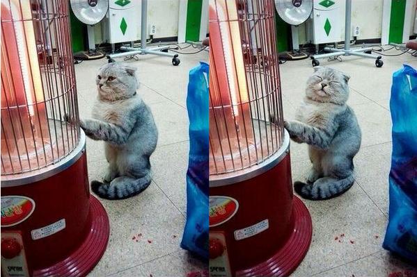 hotcat (1)
