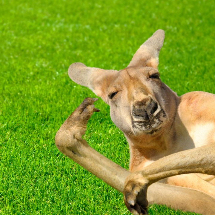 kangaroo_pet (7)