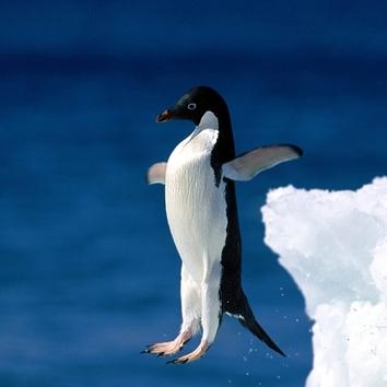 penguin (5)