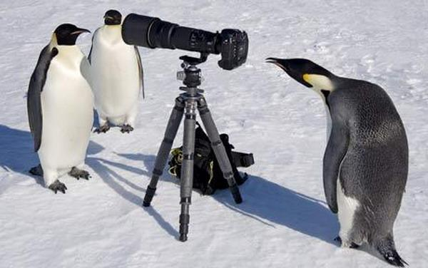 penguin (9)