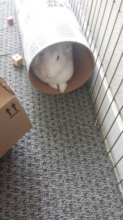 rabbit (10)