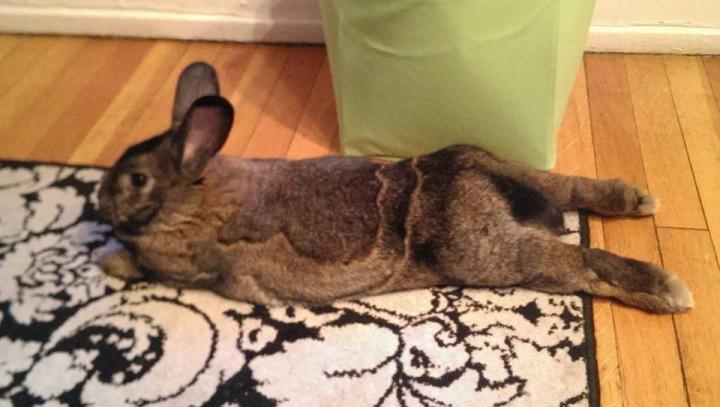 rabbit (11)