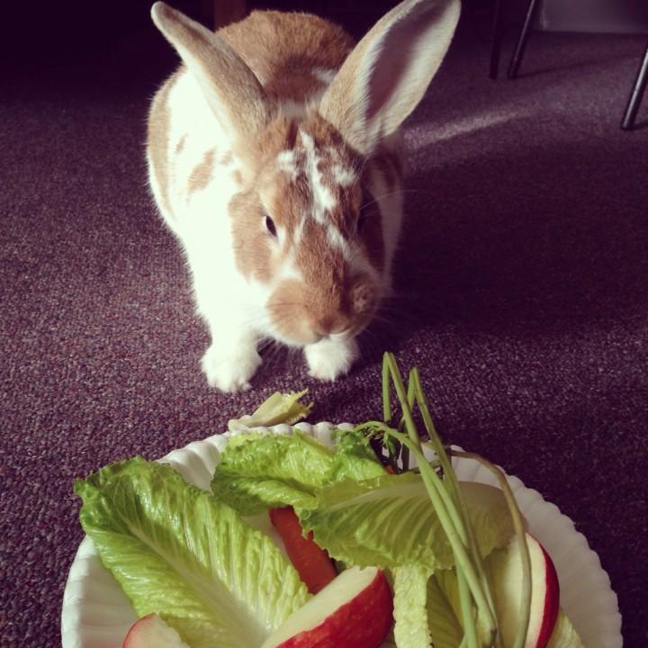 rabbit (5)