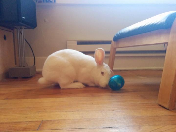 rabbit (7)