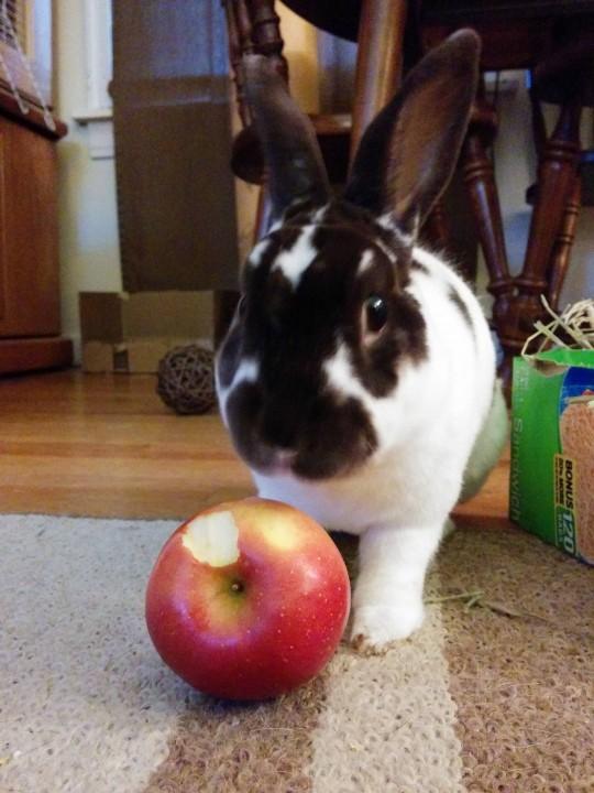 rabbit (8)