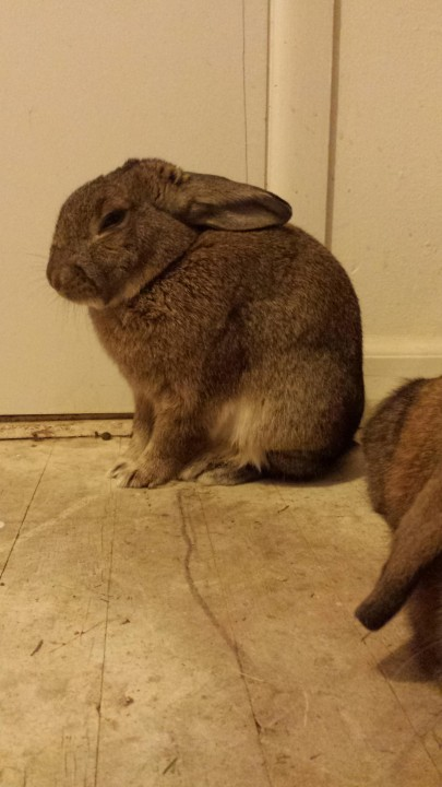rabbit (9)