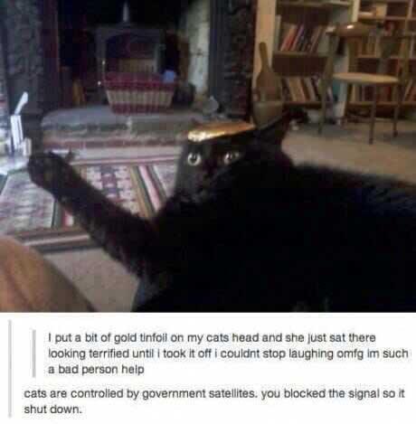 surprisecat (1)