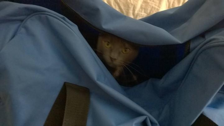 surprisecat (10)