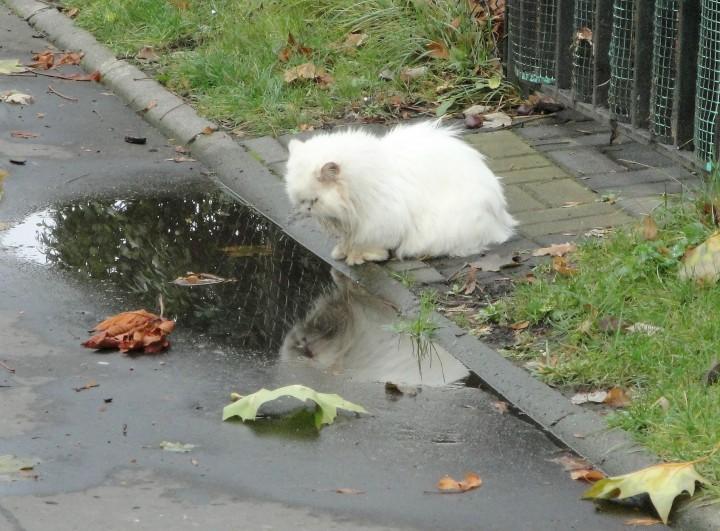 surprisecat (2)