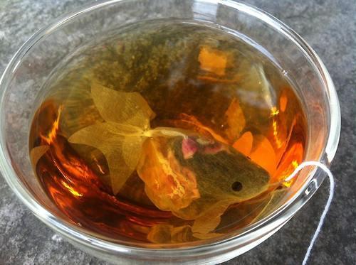 teabag_goldenfish (1)