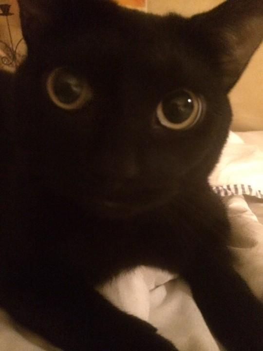 thnkful_cat (17)