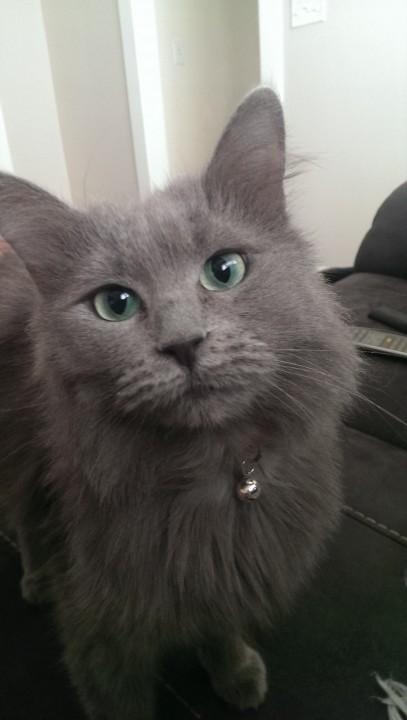 thnkful_cat (3)