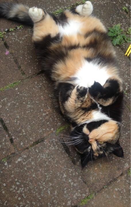 thnkful_cat (5)