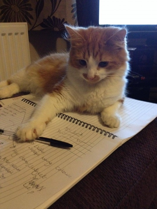 thnkful_cat (7)
