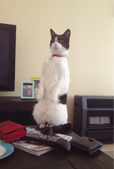 thnkful_cat (9)