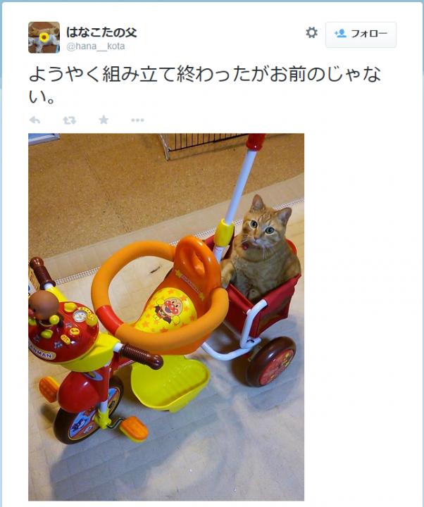 anpanmangou_cat2