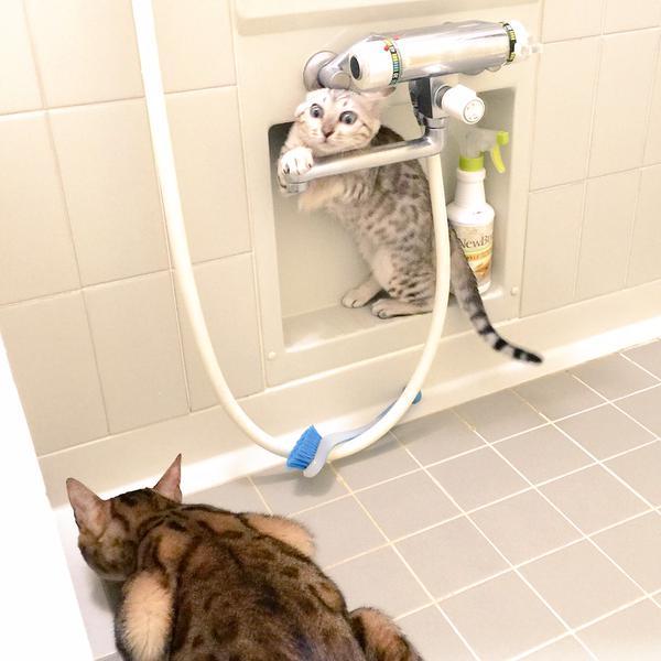 brothercat (3)