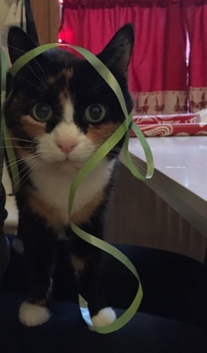 cat_peyang (1)