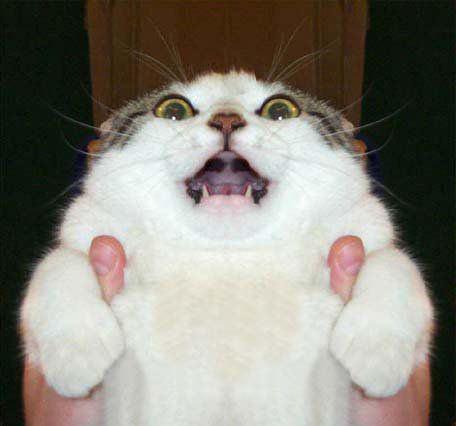 cat_peyang (4)