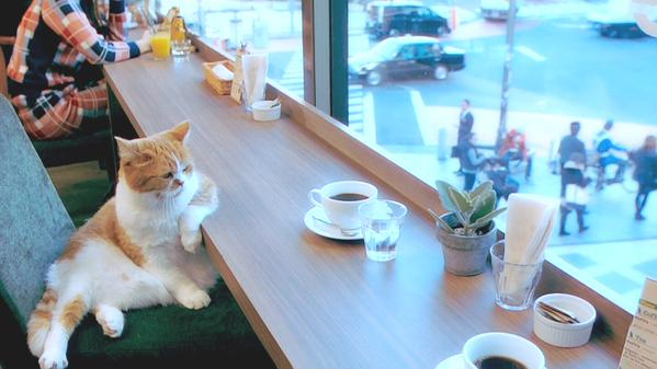 catlife (1)