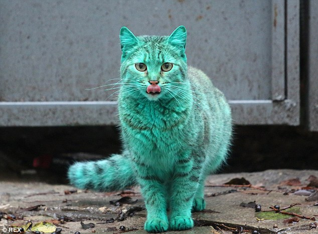 colorfulcat