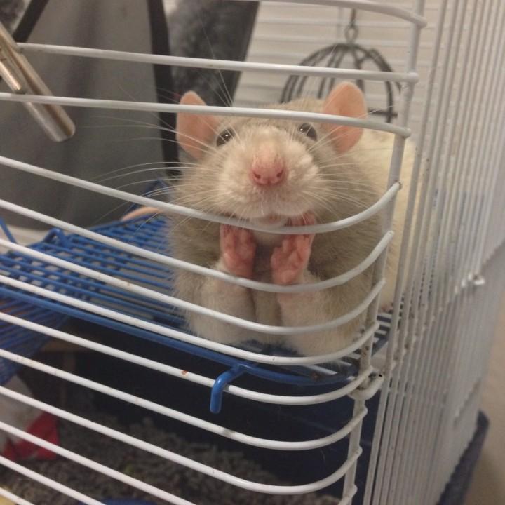 hamster_cute (1)
