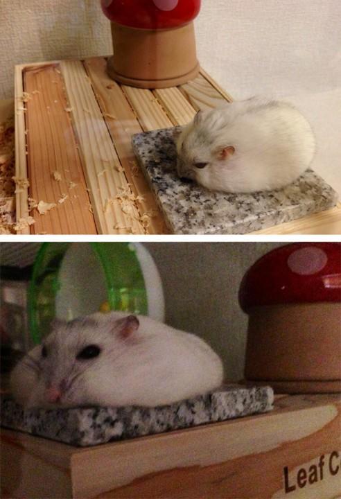 hamster_cute (8)