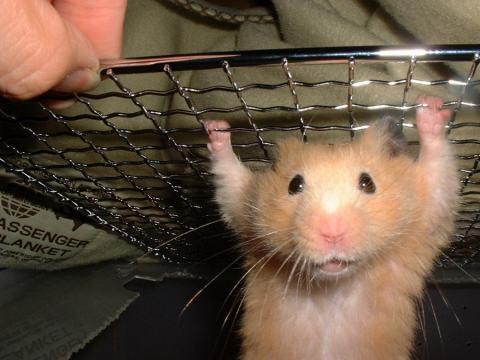 hamster_cute (9)
